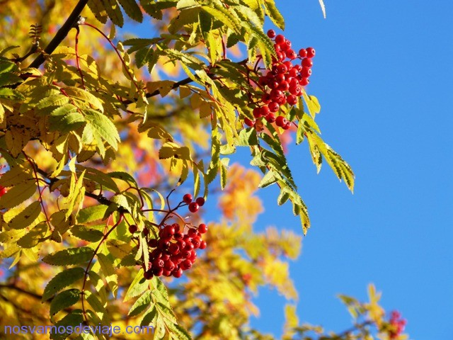 otoño en Kirkenes